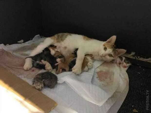 Бездомная кошка родила котят в офисе