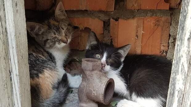 История спасения одного котенка!