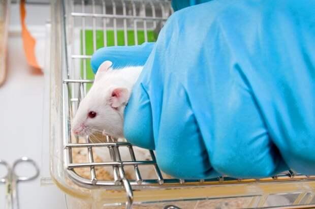 Эксперименты на мышах показали, что полная победа над онкологией возможна.