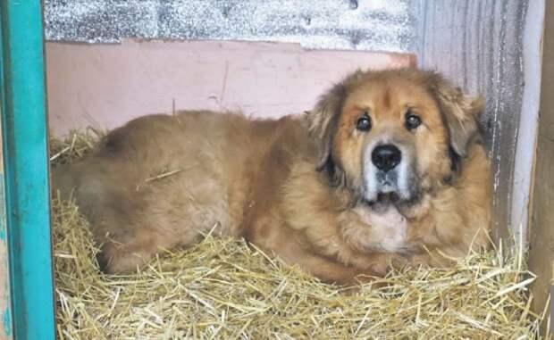 Посты в соцсетях о тяжелой жизни собак в приюте «Дубовая роща» оказались надуманными
