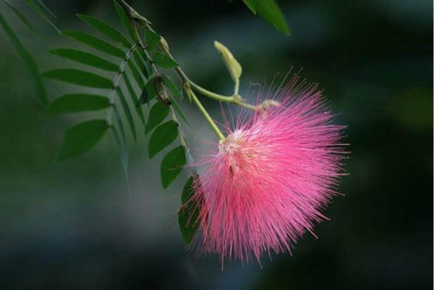 Самые необычные и удивительные растения мира, где их можно найти (окончание)