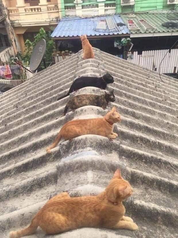 Животные, которые соблюдают социальную дистанцию куда лучше каких-то там людей
