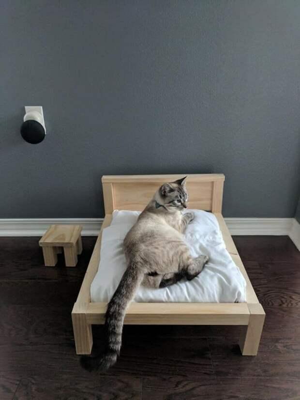 Кровать Олли - это нечто большее, чем прикол. Это, в том числе, и демонстрация навыков Криса, который уже десять лет потихоньку столярничает домашние животные, коты, кровать, мебель для кошек, мебель из дерева, миниатюрная, самоделки, своими руками
