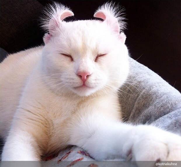 10 фактов о кошках, которых вы, скорее всего, не знали