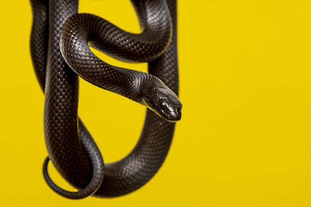 Змея напугала женщину и оказалась в пылесосе