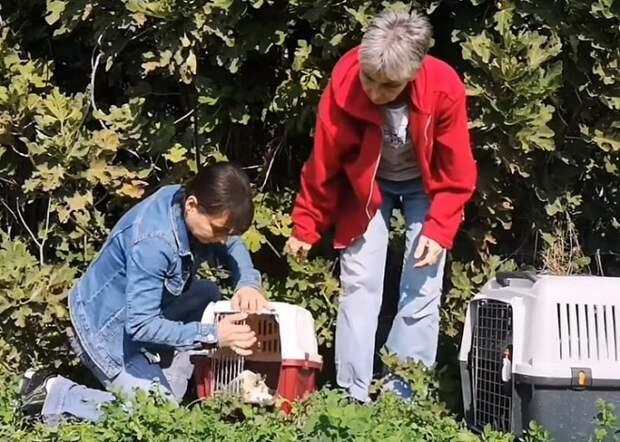 Из лесной чащи к волонтёрам вышла кормящая собака. Она была такой худой и ослабленной, что едва держалась на лапах