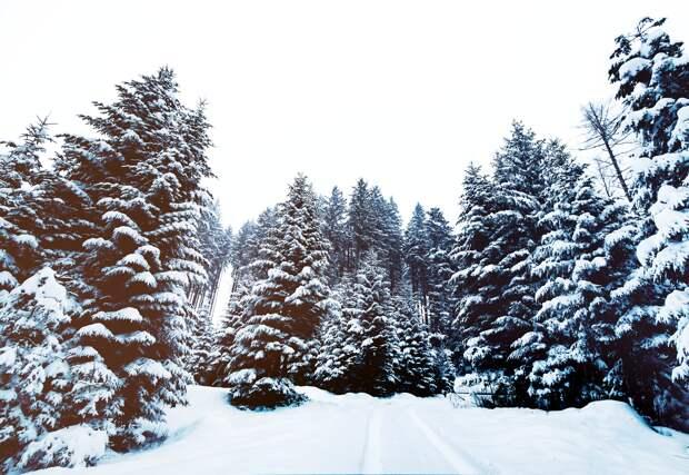 До -39 похолодает местами по Удмуртии на следующей неделе