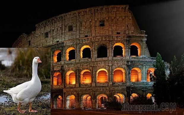 Почему римляне приносили в жертву собак и почитали гусей