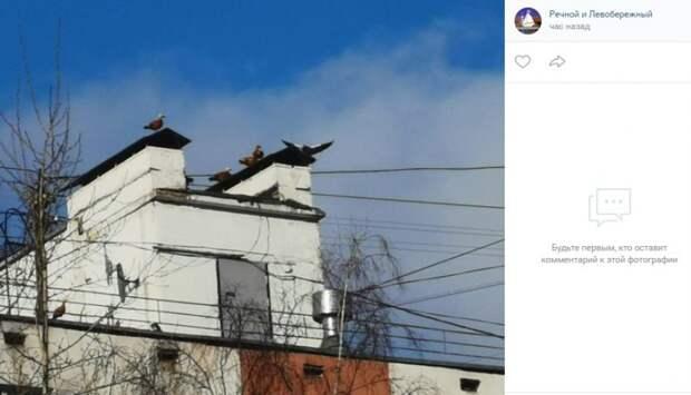 Фото дня: живой «будильник» на доме в Левобережном