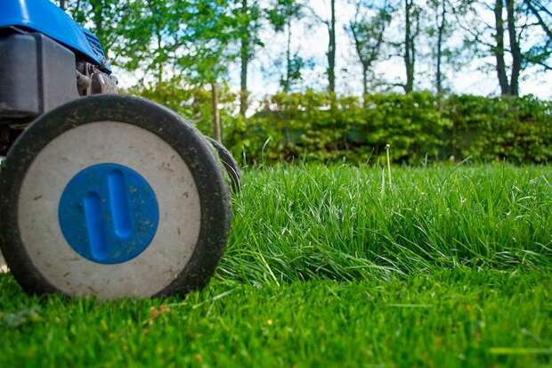 Когда и как косить газон и ухаживать за ним, чтобы был, как «новенький» - 7 полезных подсказок