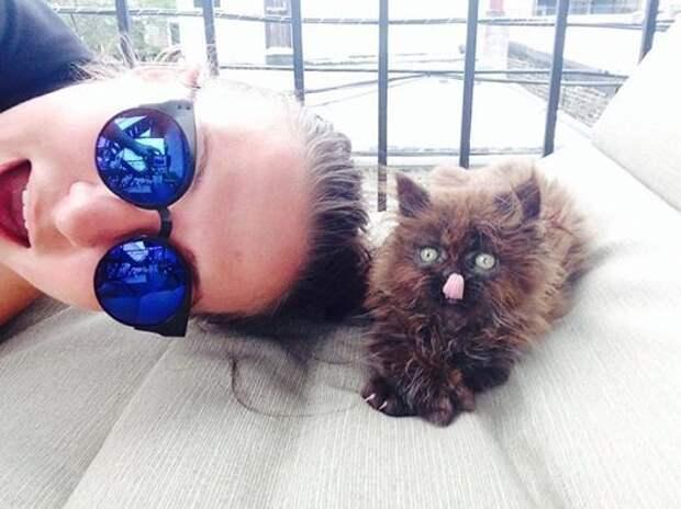 Крошечный котенок со странной лапкой был никому не нужен, только одна девушка сжалилась и подобрала его