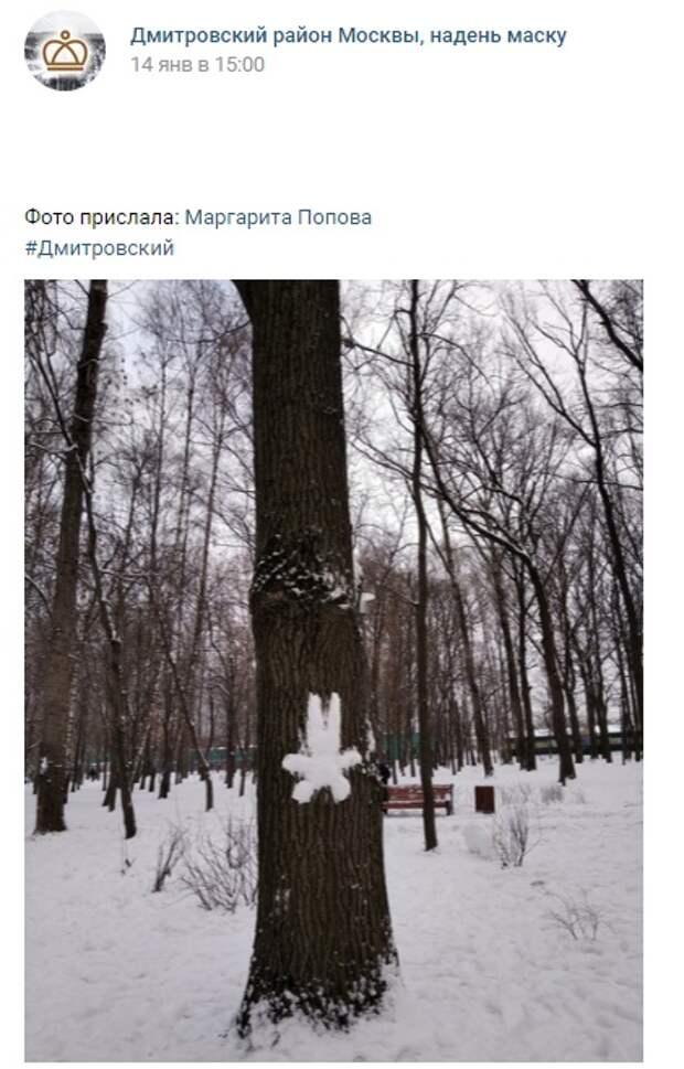 Фото дня: в Дмитровском появились «снежные зайцы»