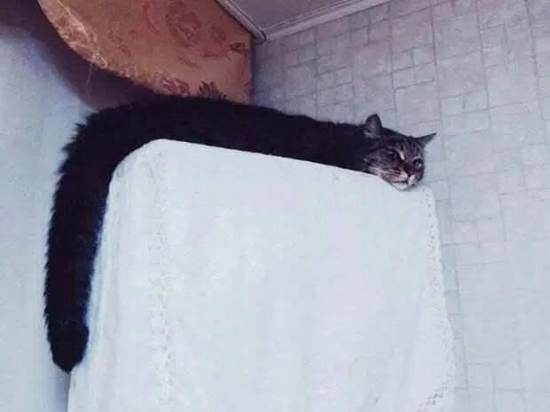 Новый тренд в соцсетях — коты-тянучки