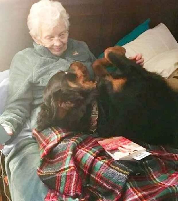 Бабушка с собакой