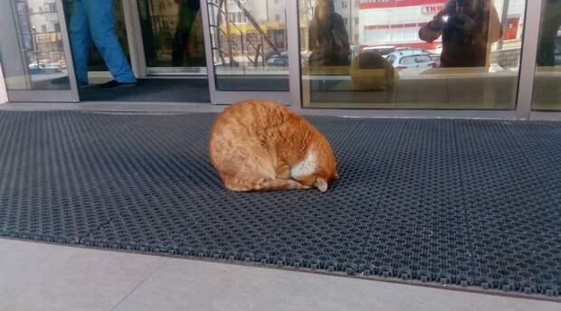"""Новороссийский кот ежедневно """"молится"""" у входа в супермаркет"""