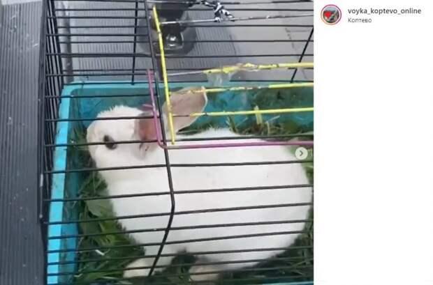 Белый кролик из парка «Бригантина» нашел дом