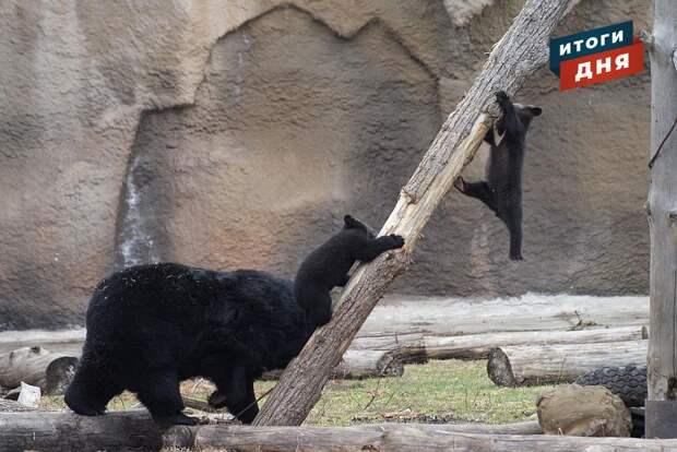 Итоги дня: рассмотрение дела Александра Соловьева, последние звонки в школах Удмуртии и имена для гималайских медвежат