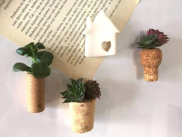 Мини-сад в доме своими руками