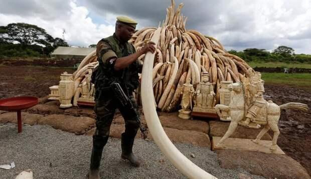 Как пластмасса остановила охоту на слонов и черепах