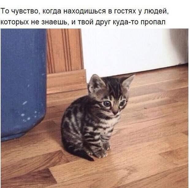 1451500599_41