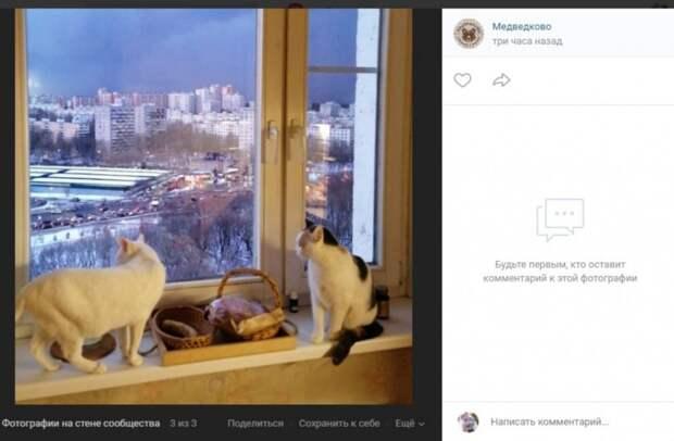 Фото: скриншот записи на странице сообщества «Медведково» Вконтакте