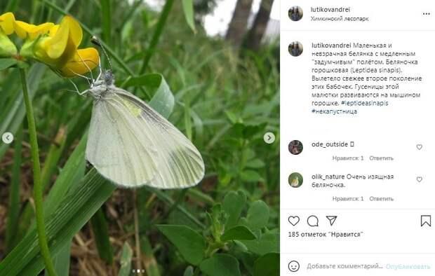 Фото дня: невзрачная белянка в Химкинском лесопарке попала в объектив камеры