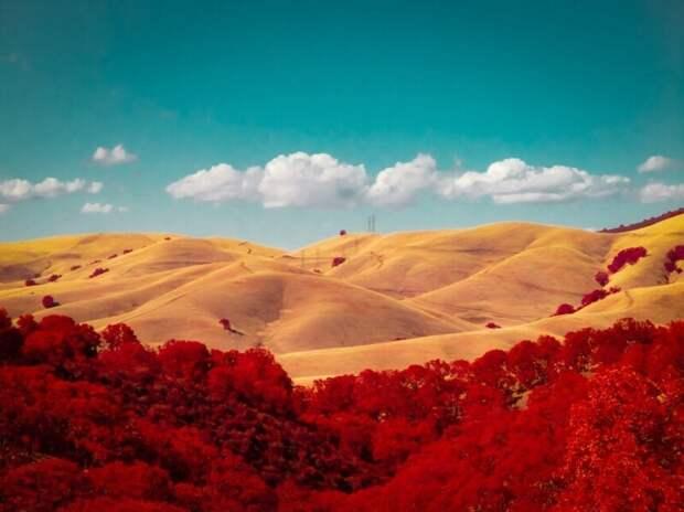 Золотые холмы. (Фото Rob Shea/Kolari Vision):