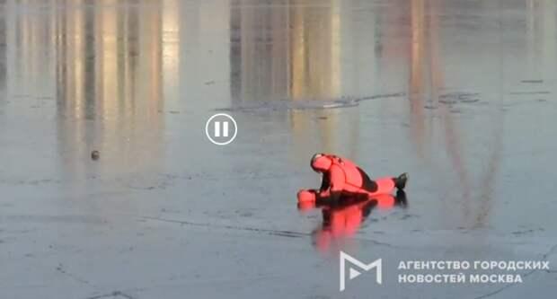 Спасатели освободили из ледяного плена утку на Химкинском водохранилище