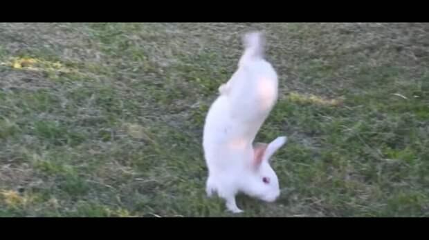 Видео: Как появились кролики, которые ходят на передних лапах