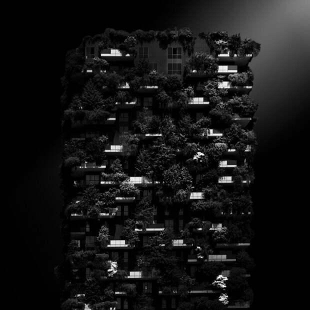 Вертикальный лес в категории черно-белые. (Фото Arian Yousefi Javan/Kolari Vision):
