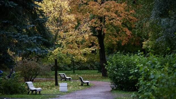 Штормовой ветер повалил 72 дерева в садах и скверах Петербурга за день