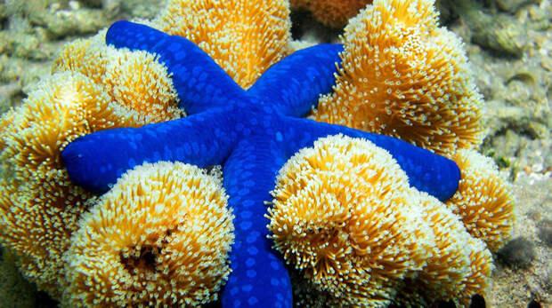 Морская звезда животные, красота, океан
