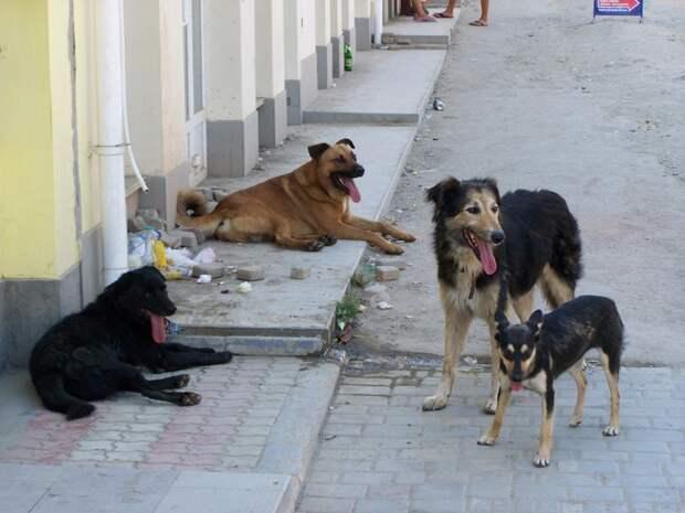 Елена Малышева в прямом эфире телепередачи «Жить здорово» призвала расстрелять бродячих собак
