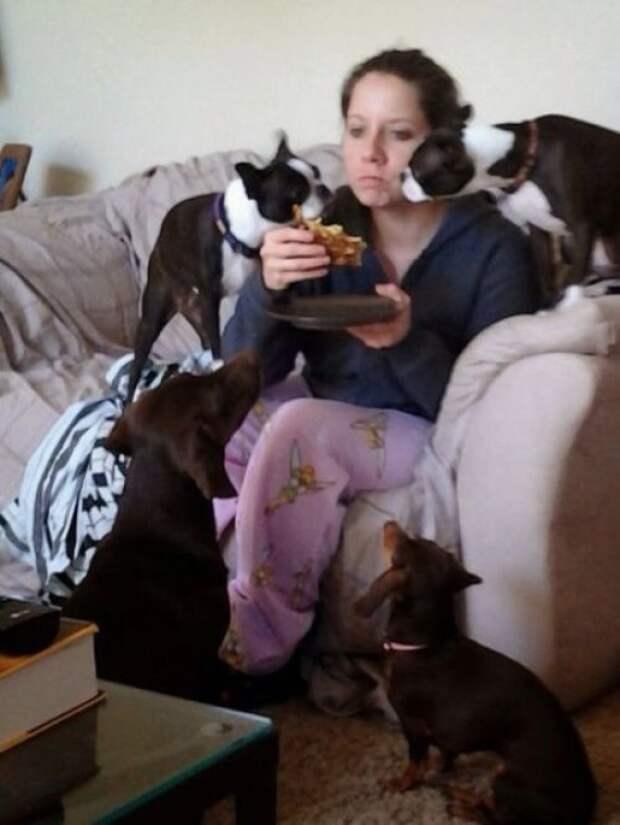 15. Попрошайки окружили животные, жизнь, кот, питомец, семья, собака, фото