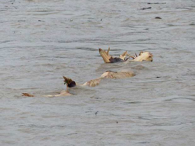 Затонувшее судно загрязнило акваторию Саяно-Шушенского водохранилища