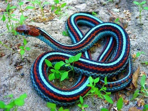 Существа странного цвета