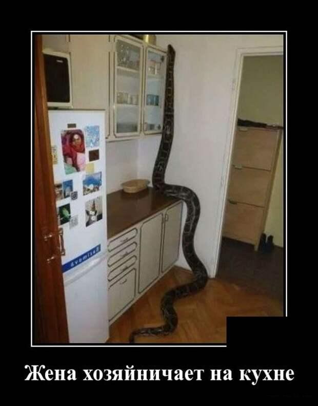 Демотиватор про змею