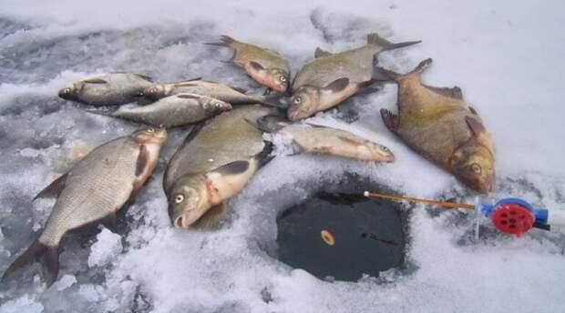 Зимняя ловля леща на спускник (комбайн)