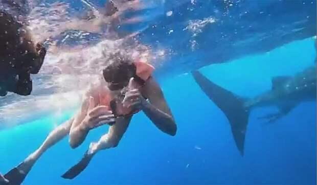 Синхронистка о плавании с акулами: Это что-то непередаваемое! Честно скажу, мне было очень страшно