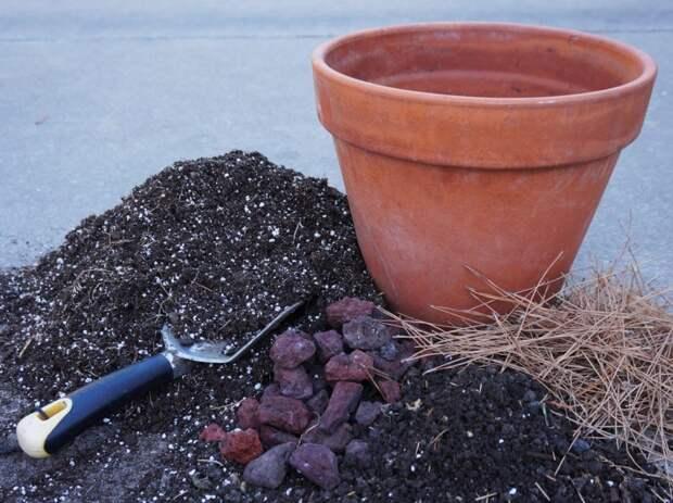 Добавки в грунт, чтобы рассада нарастила мощную корневую систему