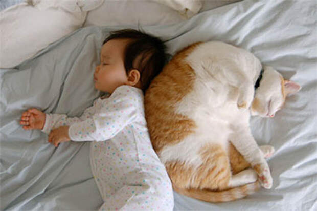 Почему кошки лучшесобак