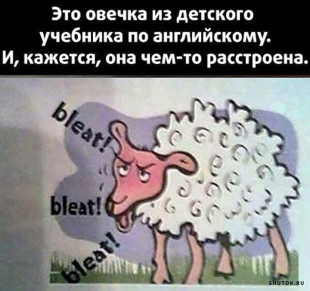 Мемы, картинки, юмор!) Весна шагает по планете!)