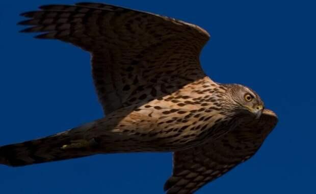 Самые опасные птицы на свете