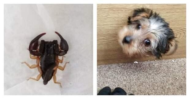 RSPCA вызывали, когда в отеле Бирмингема появился неожиданный гость - скорпион! Существо было замечено бегущим по третьему этажу отеля Hyatt Regency в Бирмингеме животные, застряли, смешно, спасение, чудесные истории