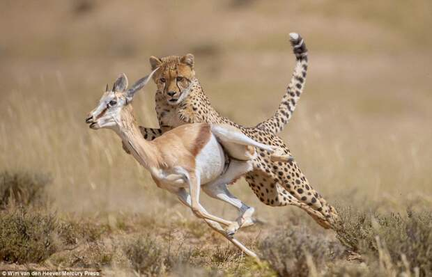 Царство животных, каким выего еще невидели: гонки, драки инежность