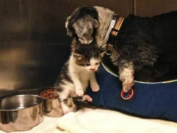 Мама-собака кормила котенка своим молоком. Благодаря ей малыш выжил