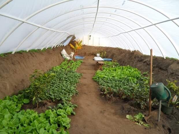 Органическое земледелие, пермакультура: подземная теплица