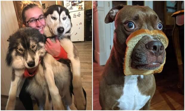 20+ смешных фото собак, с которыми явно что-то пошло нетак