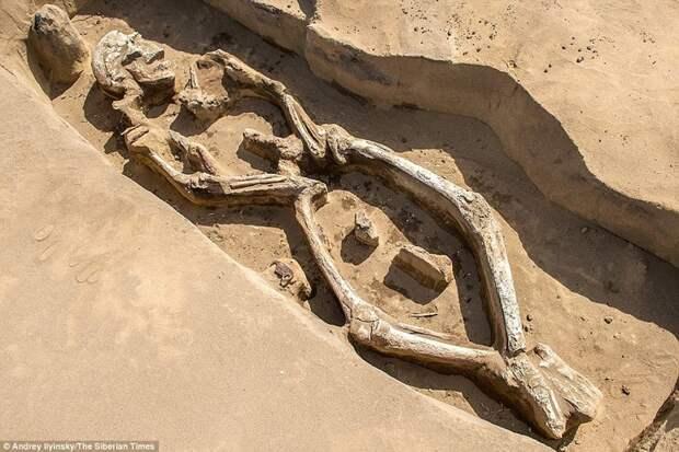 В России нашли 1300-летний «танцующий скелет» и его могила уникальна могила, находка, скелет