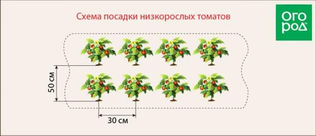 Посадка низкорослых томатов
